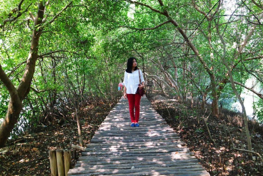 Menikmati Keindahan Wisata Alam Hutan Mangrove Jakarta