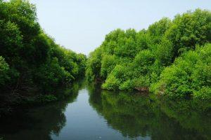 Hutan mangrove jakarta - jakartatraveller.com